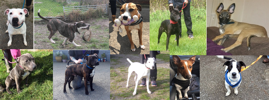 BADAW dogs